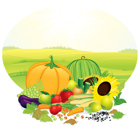 cornucopia: Harvesting ripe crop on nature -  objects grouped Illustration