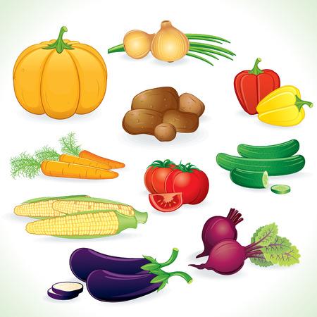 Fresh colored vegetables crop   Illustration