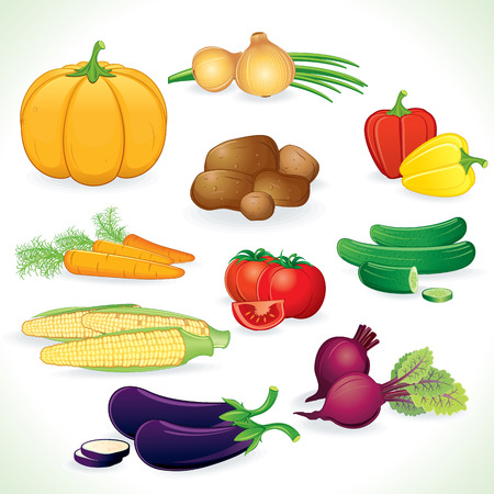 cartoon tomato: Fresh colored vegetables crop   Illustration