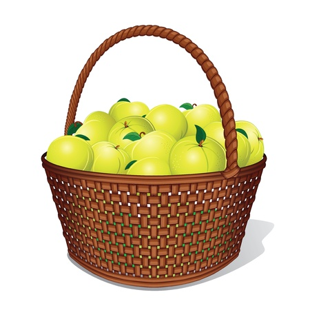rattan: Juicy Sweet Apples in Woven Basket  Vector Illustration Illustration