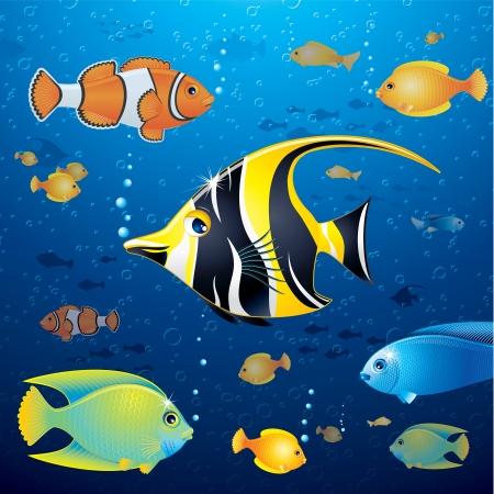 pez pecera: Fondo submarino con peces tropicales Foto de archivo
