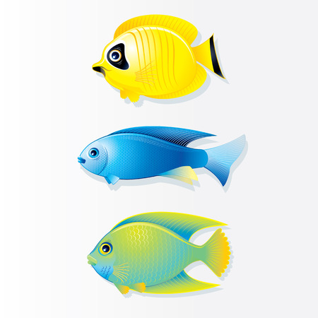 exotic fish: Cartoon Vector Tropical Fish. Butterfly Fish, Neon Fish and Queen Angel.