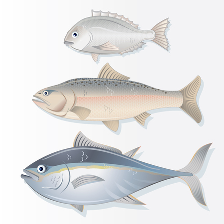 edible: Set of Edible Fishes. Dorado, Salmon and Tuna. Vector Image Illustration