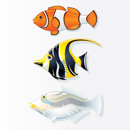 exotic fish: Tropical Reef Fishes. Clown Fish. Moorish Idol and Trigger Fish. Vector Collection