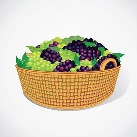 viticulture: Ripe Sweet Grapes in Woven Basket. Vector Ready for Your Design.