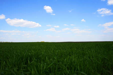 green field and blue cloudy sky, rural landsacpe photo