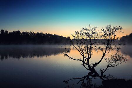 외로운 나무 일출 푸른 하늘에서 연못에서 성장.