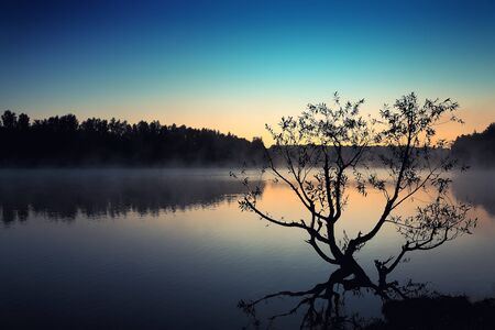 Lonely tree growing in a pond at sunrise.Blue colours.