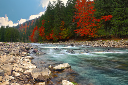 flowing river: mountain river in autumn time. Rocky shore. Colourfull forest Stock Photo