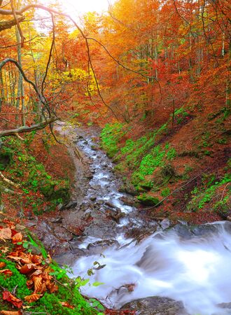 range of motion: rapid mountain river in autumn at sunset. Colorfull wood background Stock Photo