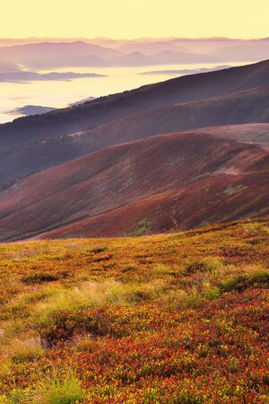 cowberry: beautiful sunrise on the mountaines and cowberry foreground
