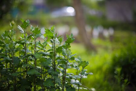 group of plants: green plants with a blurred background back. Group of plants at foreground