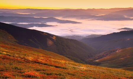 cowberry: beautiful sunrise on the mountains and cowberry foreground