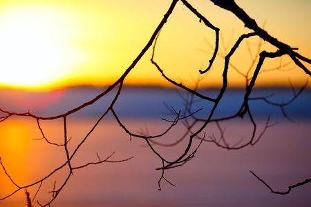 vibrant colour: leafless branch of tree at sunset. Vibrant colour Stock Photo