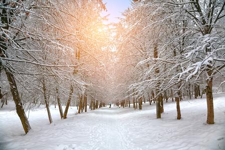 Rboles cubiertos de nieve en el parque de la ciudad. La puesta del sol Foto de archivo - 47914878