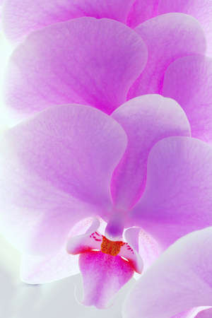 medium group of object: Pink orchid flower. Extreme close up shoot Stock Photo