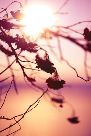 pastel background: Abstract Plant Silhouette at sunset. Shallow depth of field