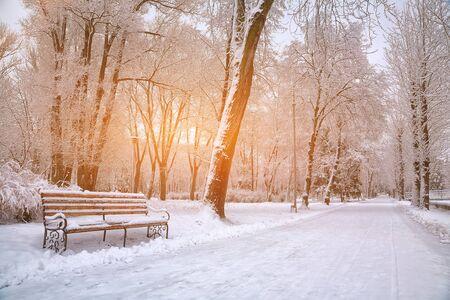 도시 공원에서 눈 덮인 나무. 일몰