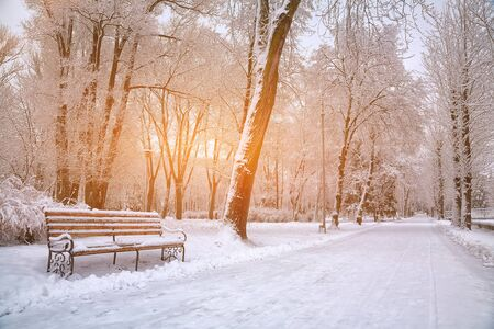 Snow-covered trees in the city park. Sunset