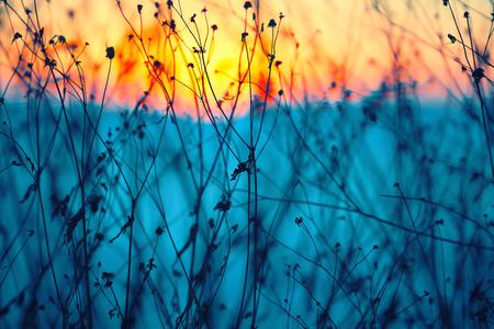 flores secas: Flores secas en un atardecer de fondo. Poca profundidad de campo Foto de archivo