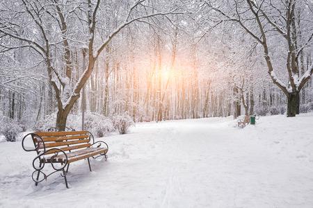Árboles y bancos cubiertos de nieve en el parque de la ciudad. La puesta del sol