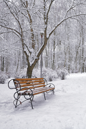 Snow-covered trees and benches in the city park. Lots of snow Foto de archivo