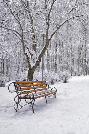 눈 덮인 나무와 벤치 도시 공원에서. 많은 눈 스톡 콘텐츠