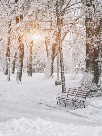 눈 덮인 나무 도시 공원에서. 일몰
