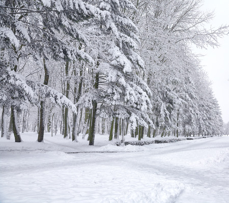 눈 덮인 나무 도시 공원에서. 많은 눈 스톡 콘텐츠