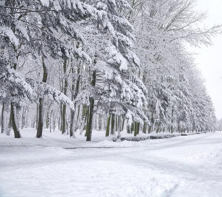 Besneeuwde bomen in het stadspark. Veel sneeuw Stockfoto