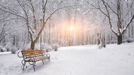 Zasněžené stromy a lavičky v městském parku. Západ slunce