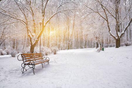 눈 덮인 나무와 벤치 도시 공원에서. 일몰 스톡 콘텐츠