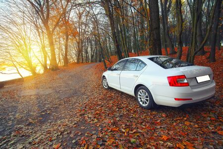 scenics: car on a forest path. Fallen leaves. Sunset