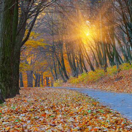 myst: Sunset in the autumn forest. Fallen leaves