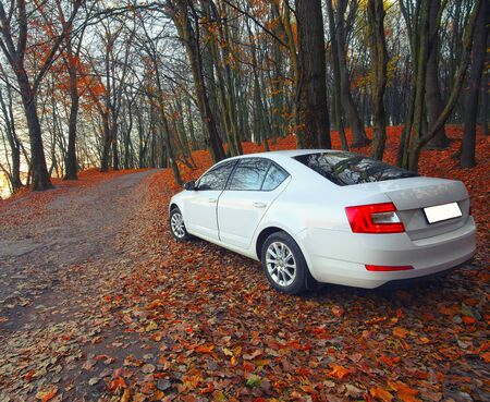 forest path: car on a forest path. Fallen leaves Stock Photo