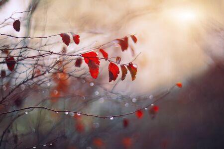 나뭇 가지와 빗방울 추상과 배경을 흐리게 스톡 콘텐츠