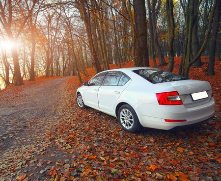 fallen leaves: car on a forest path. Fallen leaves. Sunset