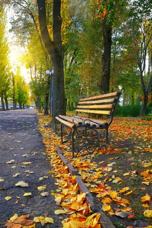 empty bench: Empty bench in the autumnal park. Fallen leaves Stock Photo