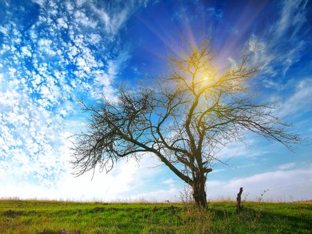 Arbre dans un champ sur un ciel bleu dramatique. soleil brillant