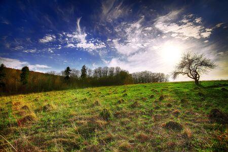 molehill: Beautiful landscape with grass, trees, sky and sun and molehills Stock Photo