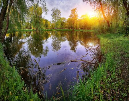 folliage: Tranquil Pond Framed by Lush Green Woodland Park in Sunshine. Reflection of trees in water