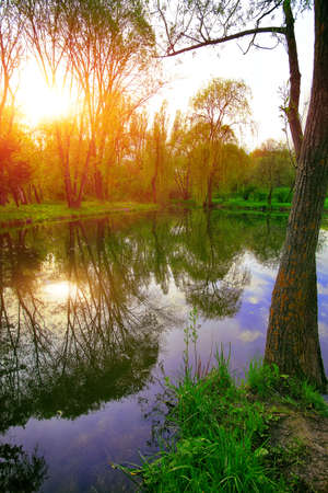 folliage: trees in the evening sun near a pond in city park. Reflection of trees in water