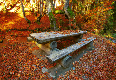 table mountain national park: Autumn forest in the mountains. Fallen leaves. Lounge area. Table with benches
