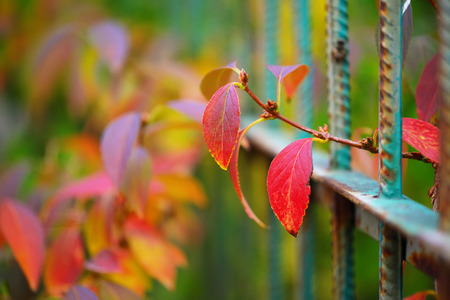 flourished: Detail of garden fence with colorful vegetation in Autumn season.