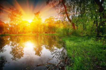 folliage: Tranquil Pond With Lush Green Woodland Park in Sunshine. Reflection of trees in water Stock Photo