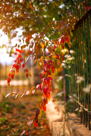 flourished: Detail of garden fence with colorful vegetation in Autumn season