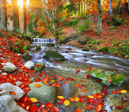 rapid mountain river in autumn. Colorfull wood background. Sunset time Stock Photo