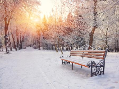 Parkbank en bomen die door zware sneeuw worden behandeld. Veel sneeuw. Zonsondergang