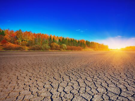 land plant: Land with dry and cracked ground. Climate change, dry lake