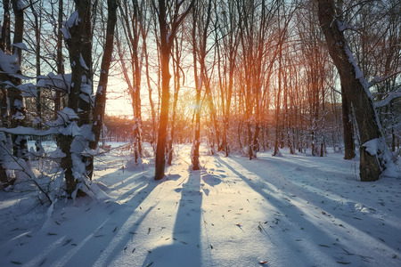 Beautiful winter sunset with trees in the snow. twilight Stock Photo